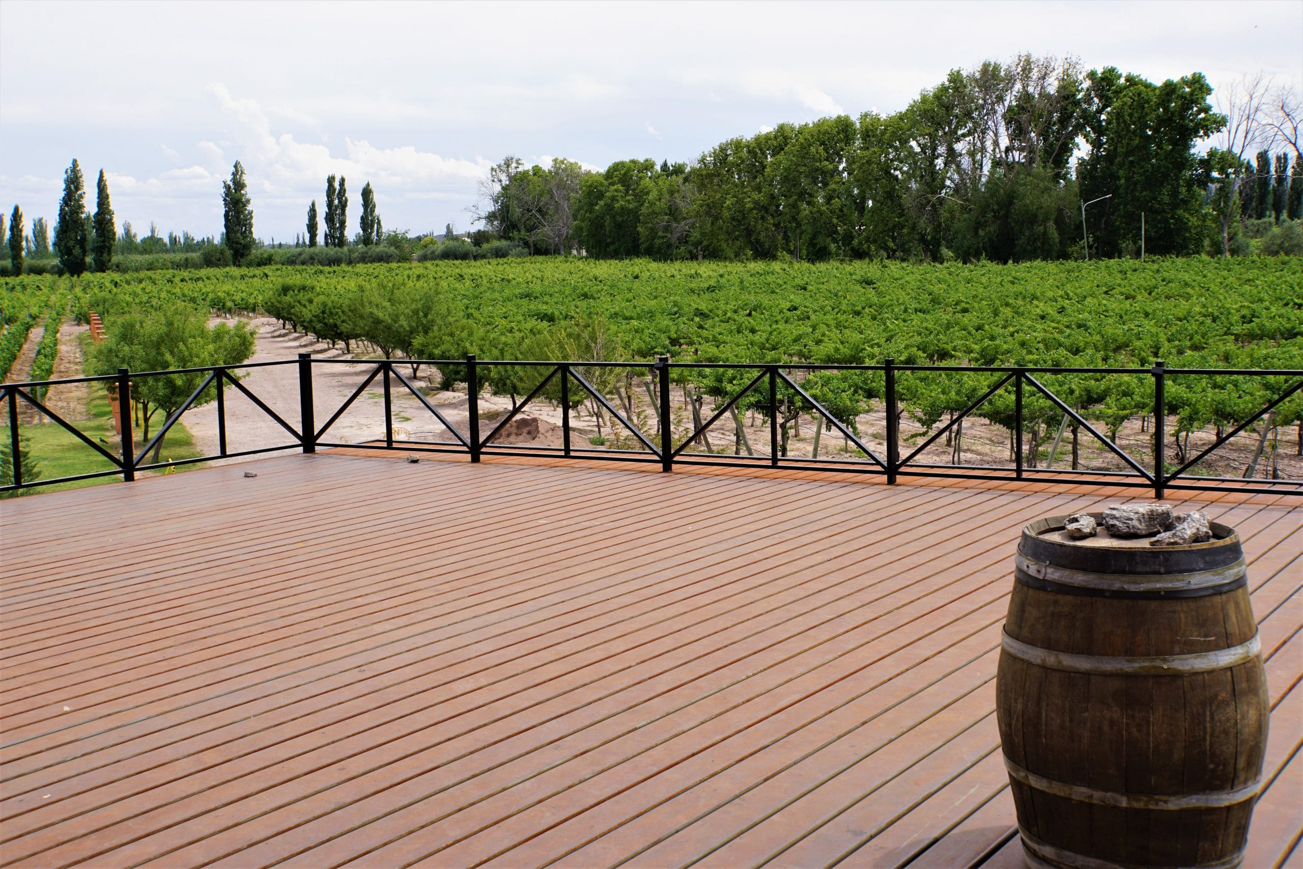 Read more about the article בין הרים ובין כרמים – לטייל בשביל היין