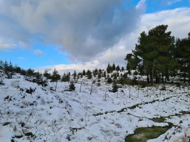 שלג מקבל את פנינו