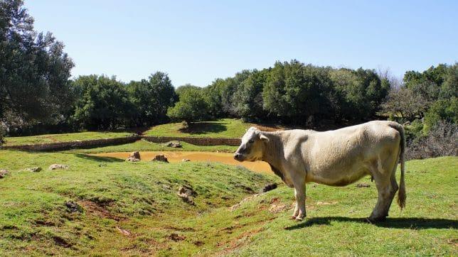 בריכת חפור, סיפורי פרות עוד יסופרו